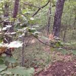 Tela con ragno nel bosco di Monte Molino