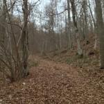 Monte Molino - sentiero